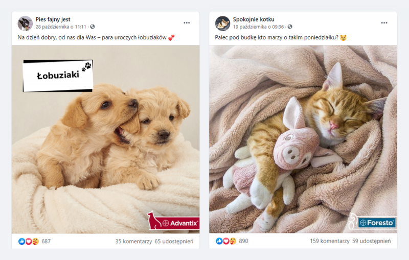 Pies fajny jest i Spokojnie kotku - przykłady postów na Facebooku